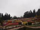 Экскурсия в Никитский ботанический сад_4